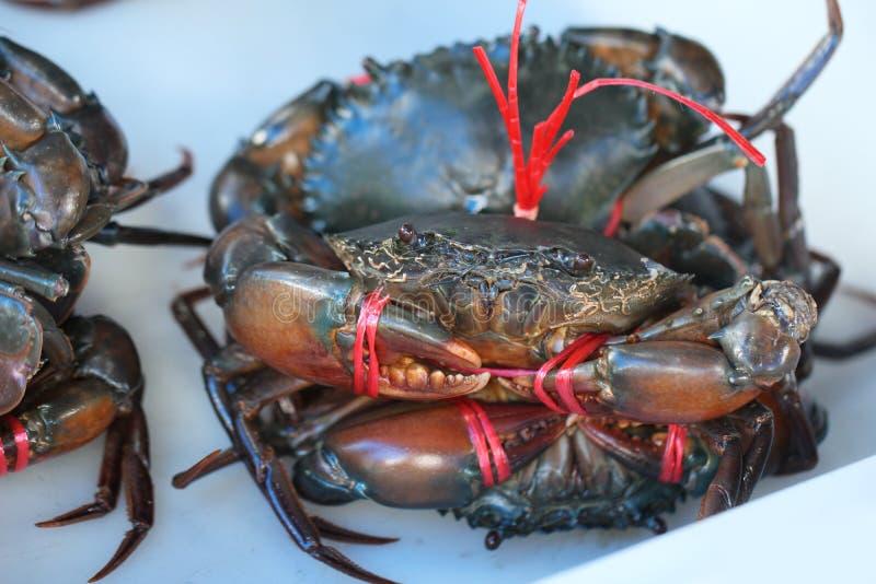 Grupa schwytany żywy Słodkowodny krab, skrzyknący skorupy zwierzę w oceanu świeżego rynku owoce morza restauracji, ciężarny owoce zdjęcie royalty free