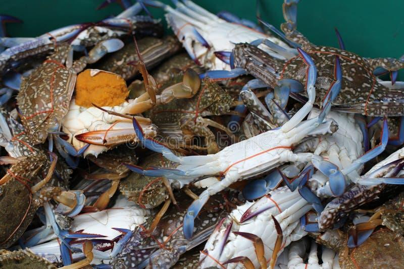 Grupa schwytany żywy Słodkowodny krab, skrzyknący skorupy zwierzę w oceanu świeżego rynku owoce morza restauracji, ciężarny owoce zdjęcie stock