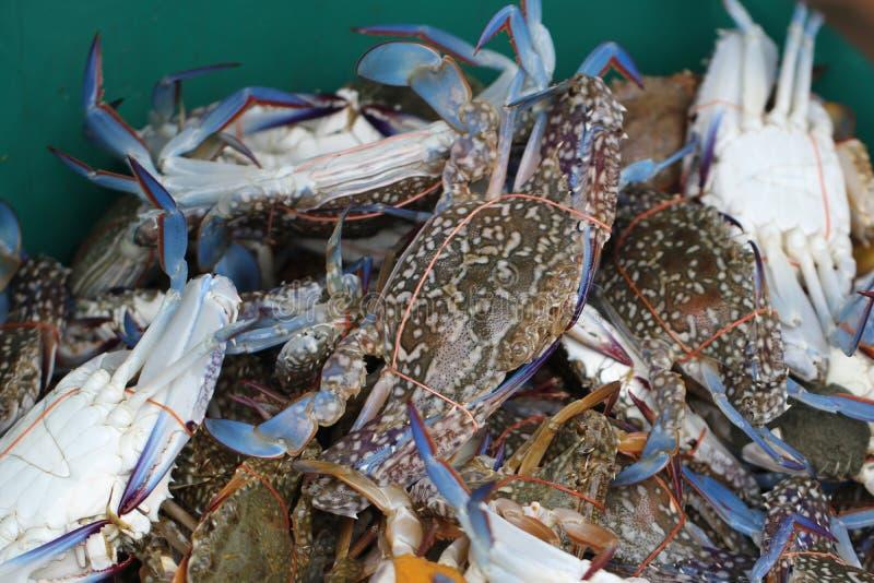 Grupa schwytany żywy Słodkowodny krab, skrzyknący skorupy zwierzę w oceanu świeżego rynku owoce morza restauracji, ciężarny owoce obraz stock