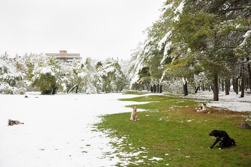 Grupa siedzi w parku zakrywającym z śniegiem i trawą przybłąkani psy zdjęcie royalty free