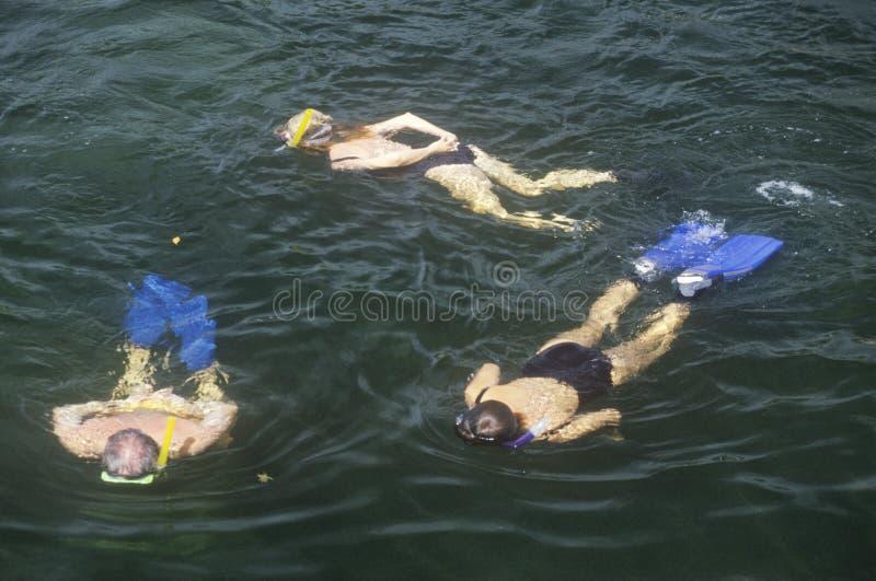 Grupa Snorkelers w wodzie, Key West, FL obraz stock