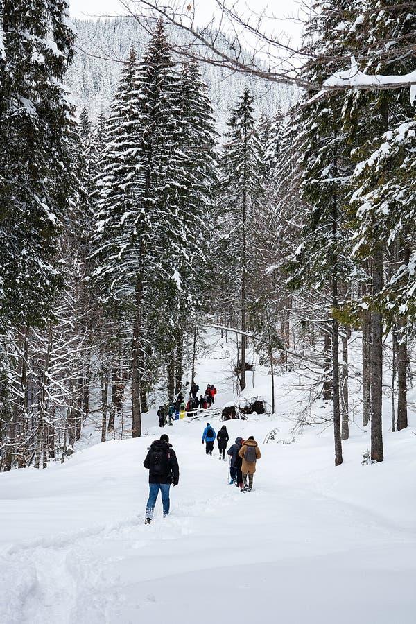 Grupa trekkers na śnieżnym śladzie w zima lesie obrazy stock