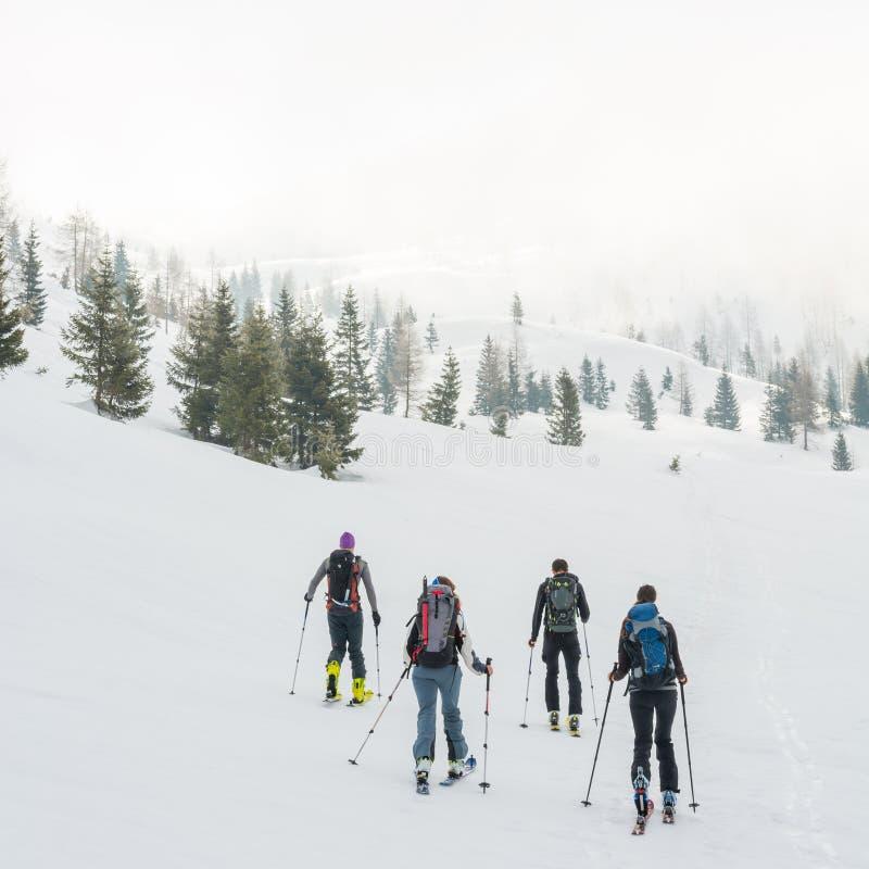 Grupa tylnego kraju narciarki chodzi przez mglistej doliny fotografia royalty free