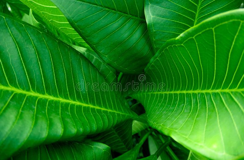 Grupa widoku podglądu i punktu skupienia tła zielonego liścia obrazy royalty free
