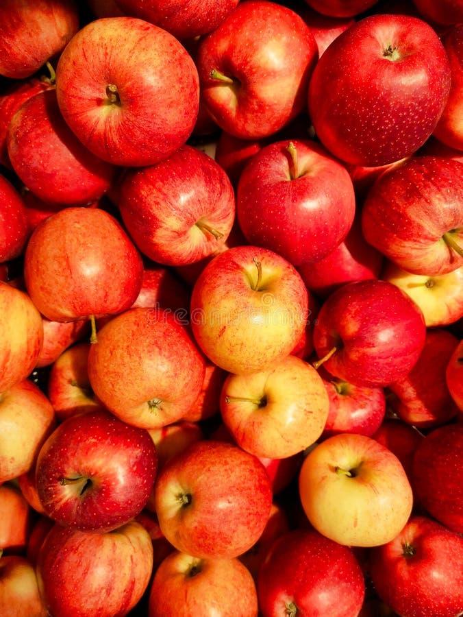 Grupa wyśmienicie czerwoni jabłka obraz stock