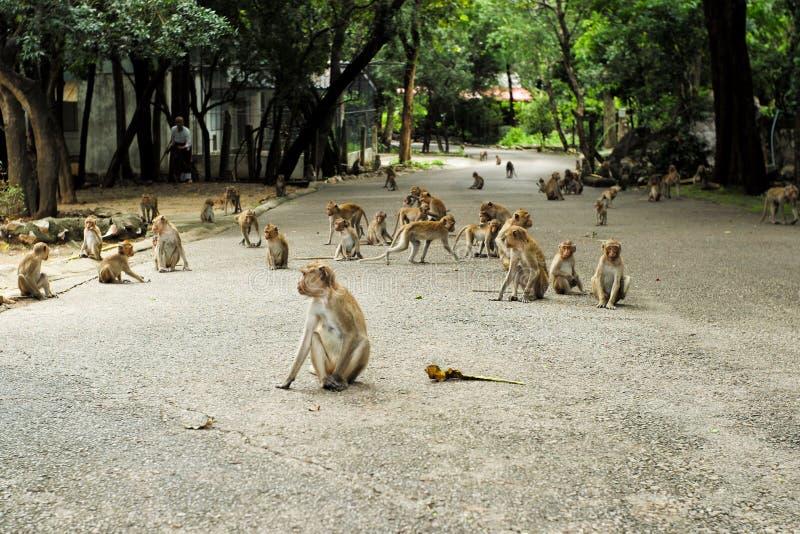 Grupa zatłoczona małpa na cementowej drodze przy buddhism templ obraz stock