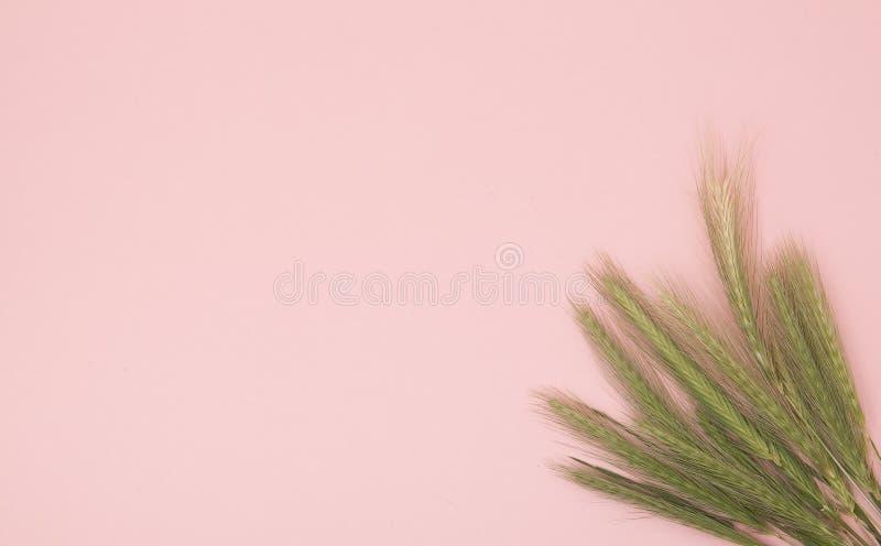 Grupa zieleń kolce na różowym tle Instagram pojęcie zdjęcia stock