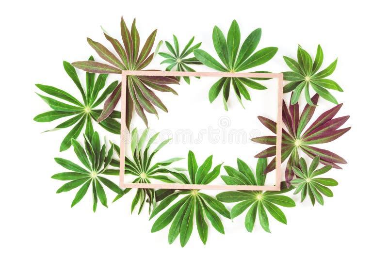 Grupa zielona egzotyczna liść rama odizolowywająca obraz stock