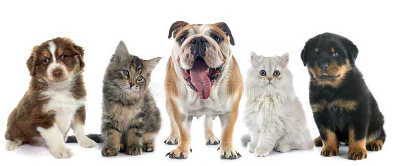 Grupa zwierzę domowe obrazy stock