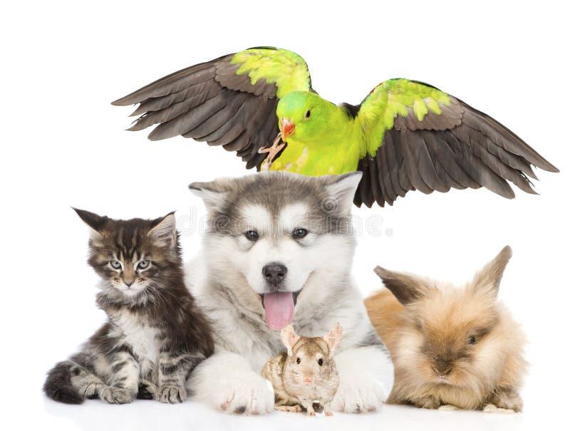 Grupa zwierzęta domowe kłama w przodzie pojedynczy białe tło obrazy royalty free
