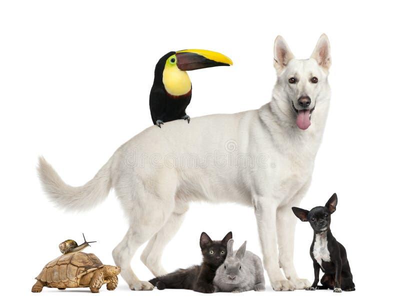 Grupa zwierzęta domowe, pies, żółw, ślimaczek, królik, ptak, fotografia stock