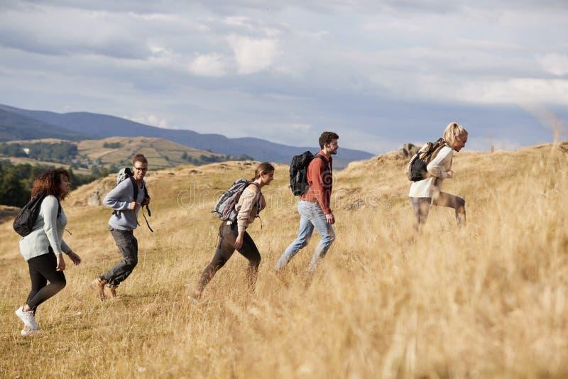 Grupo étnico multi de amigos adultos jovenes felices que suben una colina durante un alza de la montaña, vista lateral imagen de archivo