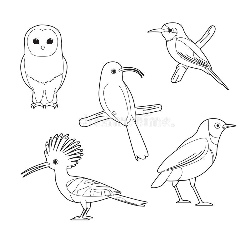 Grupo africano do vetor dos desenhos animados do Abelha-comedor de Owl Hoopoe Starling do livro para colorir do pássaro ilustração do vetor