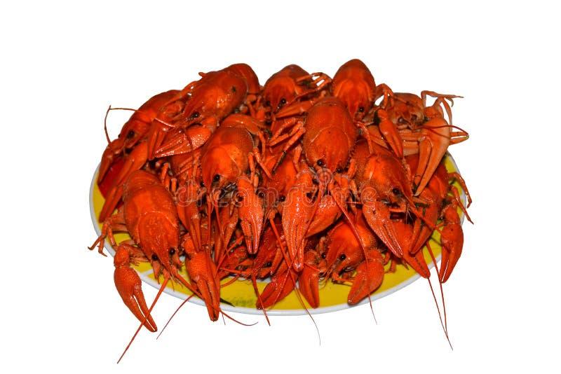 Grupo aislado de crawfishes hervidos rojos en una placa amarilla, primer imagen de archivo