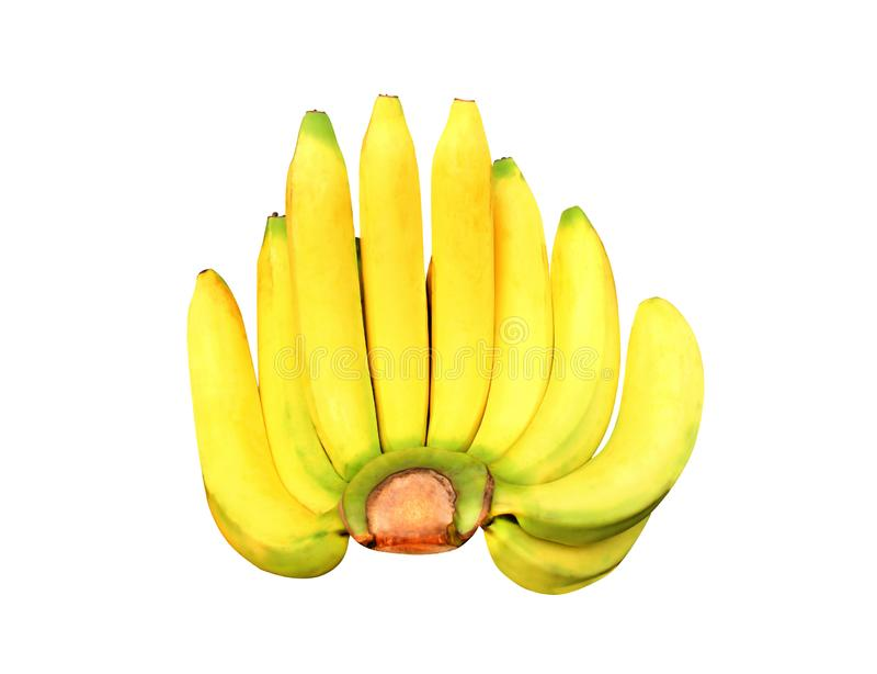 Grupo amarelo fresco Gros Michel das bananas isolado no fundo branco com trajeto de grampeamento imagens de stock royalty free