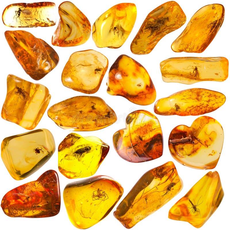 Grupo ambarino Báltico da pedra de 20 foto de stock