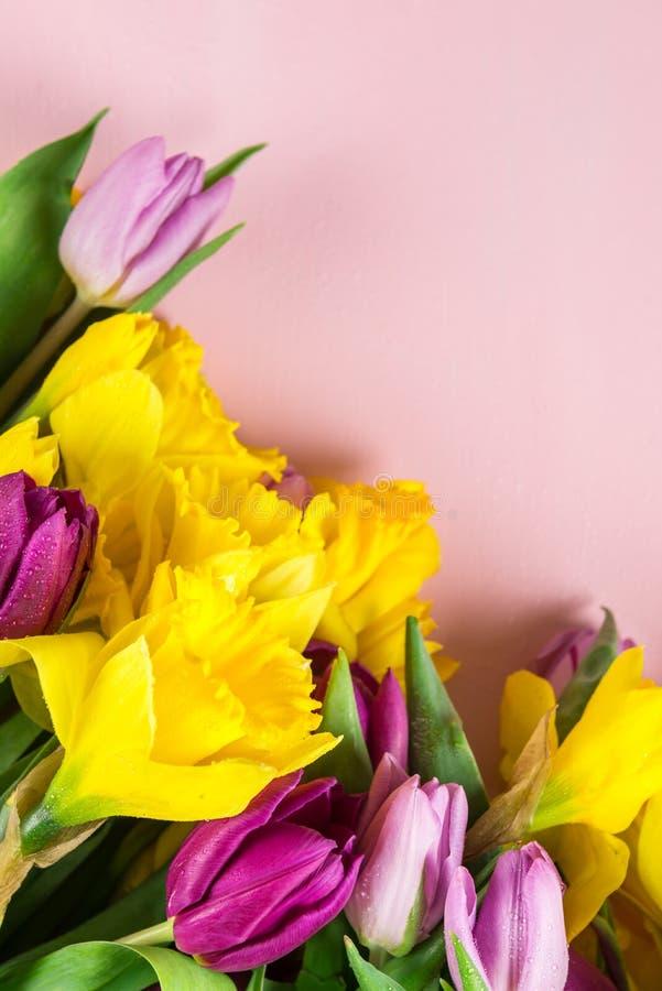 Grupo bonito das tulipas e de narcisos amarelos amarelos no Backg cor-de-rosa fotografia de stock
