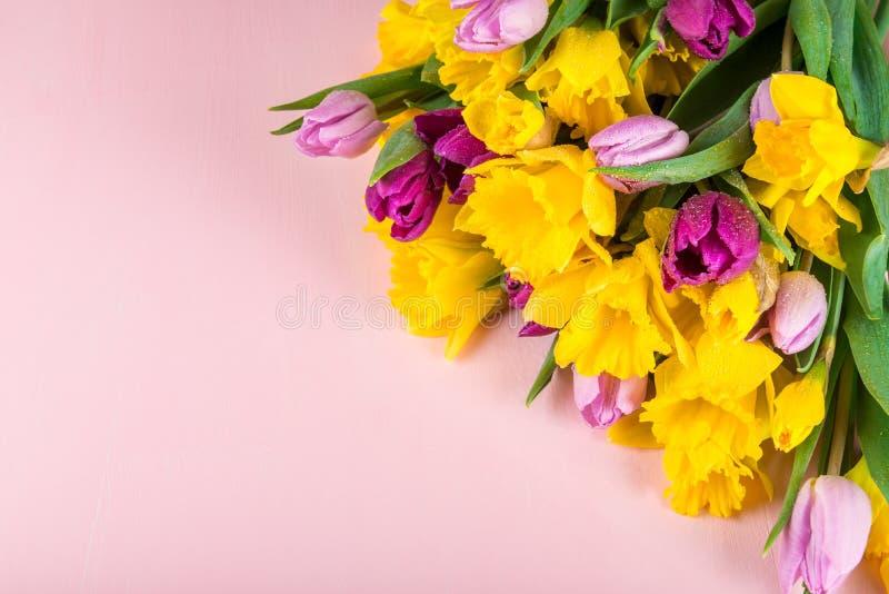 Grupo bonito das tulipas e de narcisos amarelos amarelos no Backg cor-de-rosa imagem de stock