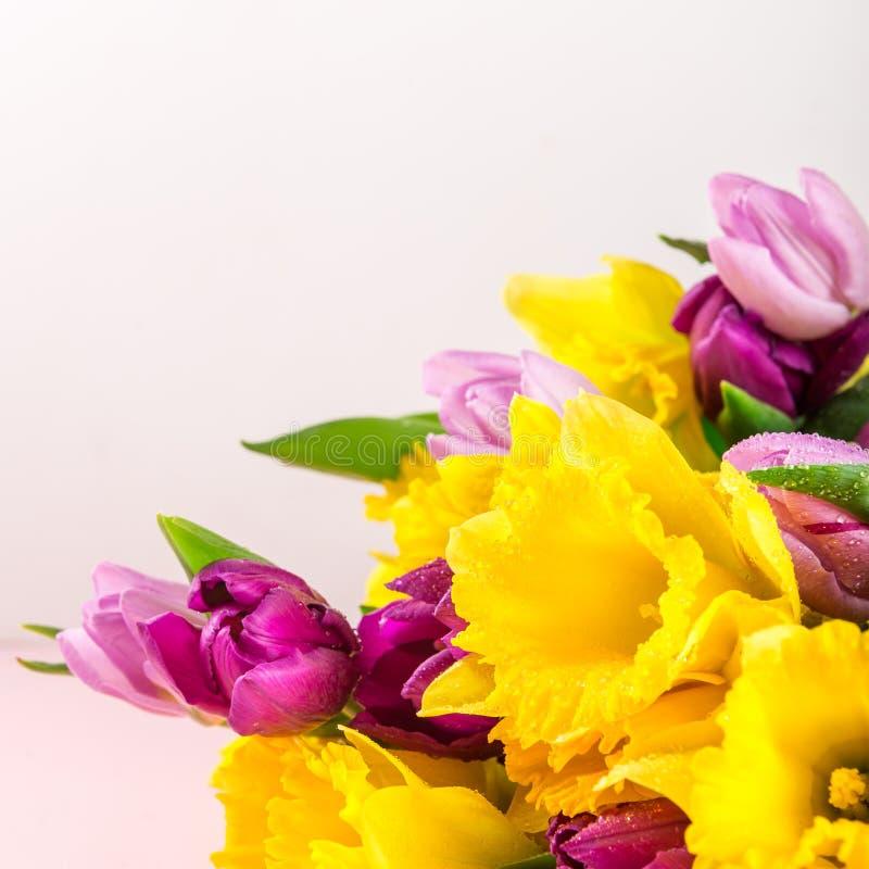 Grupo bonito das tulipas e de narcisos amarelos amarelos no Backg cor-de-rosa imagens de stock