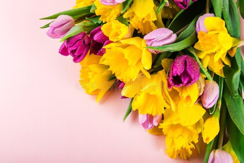 Grupo bonito das tulipas e de narcisos amarelos amarelos no Backg cor-de-rosa fotos de stock royalty free