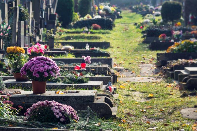 Grupo bonito em sepulturas, outono da flor no cemitério, Praga, República Checa, dia ensolarado fotos de stock royalty free