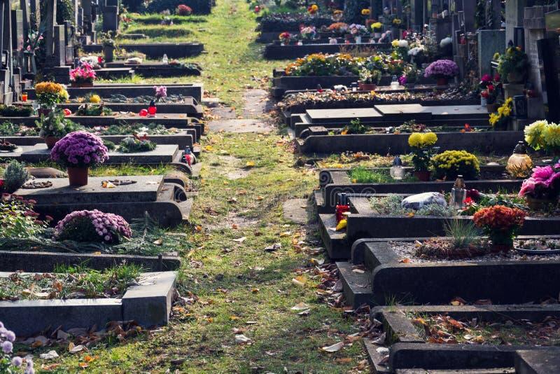 Grupo bonito em sepulturas, outono da flor no cemitério, Praga, República Checa, dia ensolarado imagem de stock