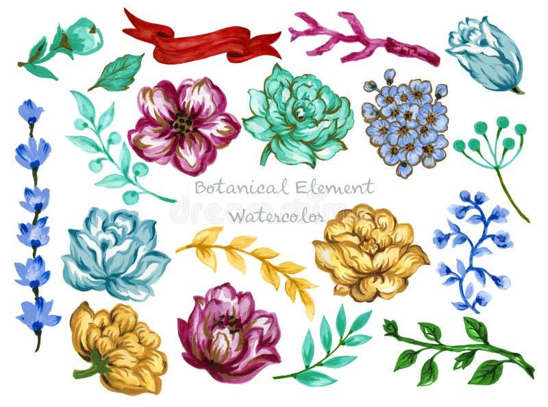 Grupo botânico da coleção das folhas da ilustração da aquarela de jardim selvagem e da flor e de elementos abstratos da folha ilustração royalty free