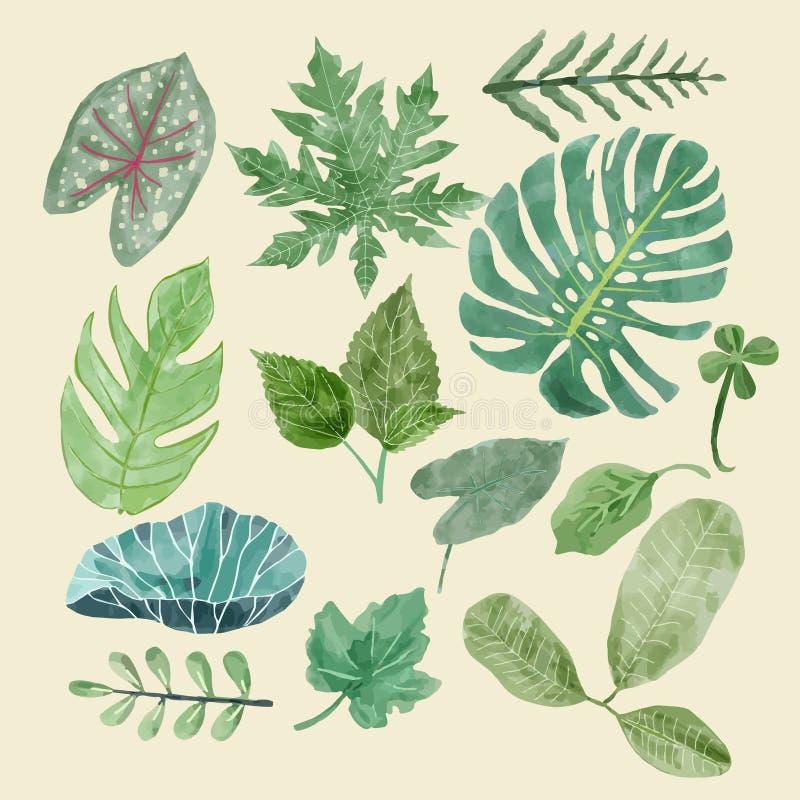 Grupo botânico do clipart de folhas verdes, plantas tropicais ilustração do vetor