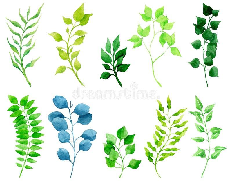Grupo brilhante da aquarela de plantas verdes e de folhas ilustração stock