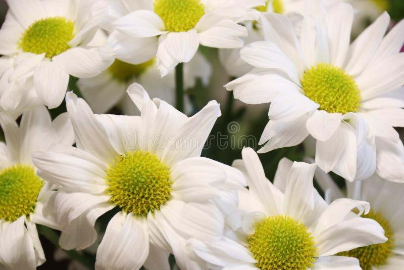 Grupo brilhante das flores das cores imagens de stock royalty free