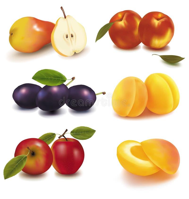 Grupo colorido de fruta. stock de ilustración