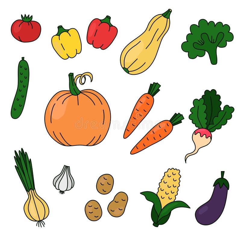 Grupo colorido do vetor das garatujas dos vegetais ilustração do vetor