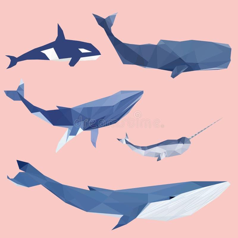 Grupo colorido geométrico da baleia ilustração royalty free