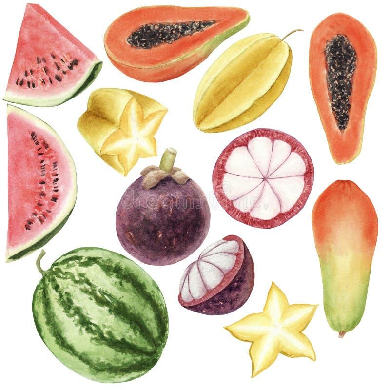 Grupo colorido tirado m?o da aquarela do brigt de frutos tropicais isolados ilustração royalty free