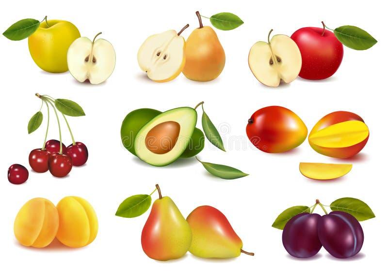 Grupo com sortes diferentes da fruta. ilustração stock