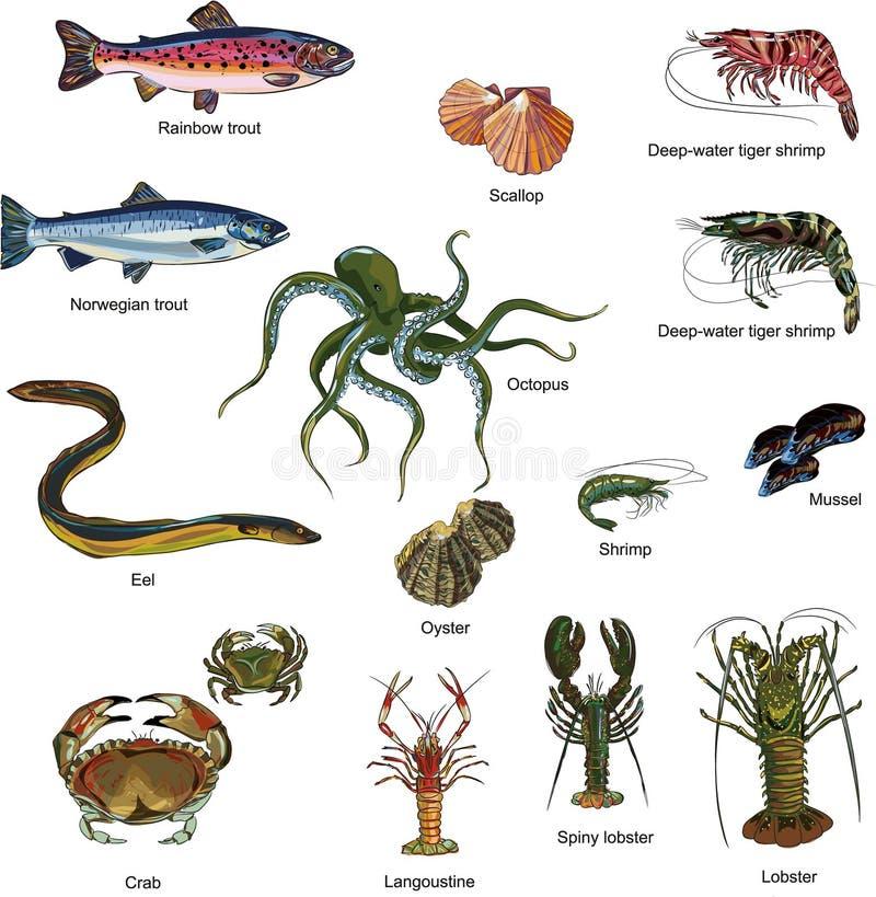 Grupo comestível dos seres do mar do marisco fotografia de stock royalty free