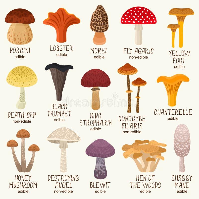 Grupo comestível e não comestível do vetor dos cogumelos ilustração do vetor