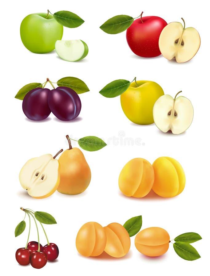 Grupo con diversas clases de fruta. Vector stock de ilustración
