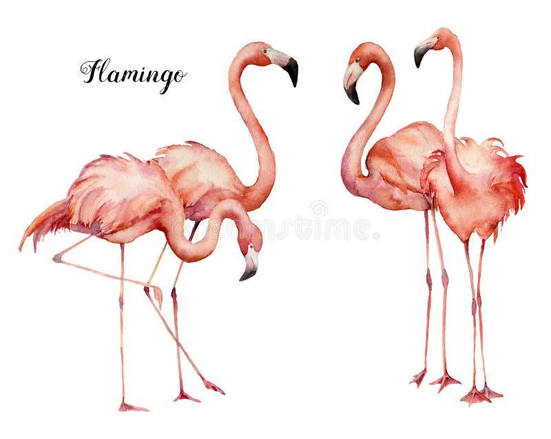 Grupo cor-de-rosa do grupo do flamingo da aquarela quatro Pássaros exóticos brilhantes pintados à mão isolados no fundo branco Vi ilustração do vetor