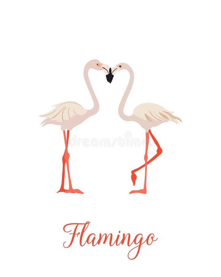 Grupo cor-de-rosa do flamingo dois P?ssaro tropical ex?tico ilustração do vetor