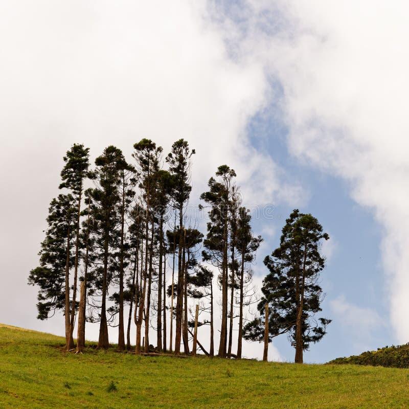 Grupo da árvore no prado verde na paisagem montanhosa foto de stock royalty free