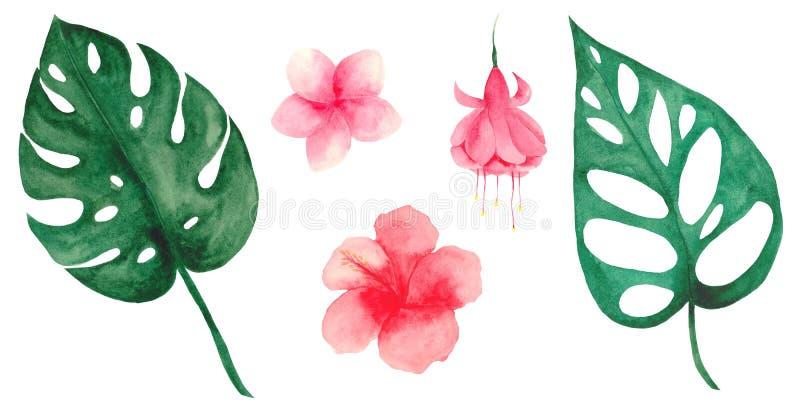 Grupo da aquarela com folhas e as flores tropicais ilustração stock