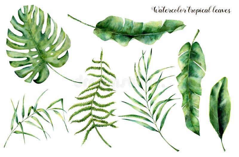 Grupo da aquarela com folhas tropicais Ramo pintado à mão, samambaia e folha da palma da magnólia Planta tropica isolada no branc
