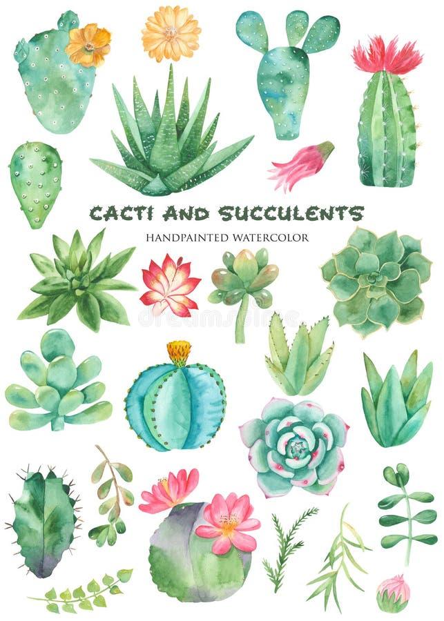 Grupo da aquarela de cactos, plantas carnudas, seixos ilustração royalty free