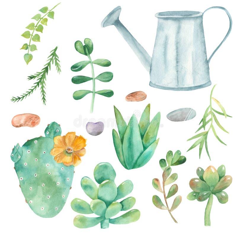 Grupo da aquarela de cactos, plantas carnudas, seixos, potenciômetros de flor ilustração do vetor