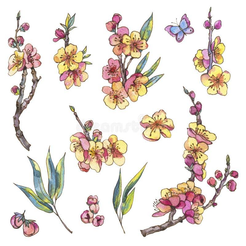 Grupo da aquarela de elementos naturais da mola, flores do vintage, bloo ilustração royalty free