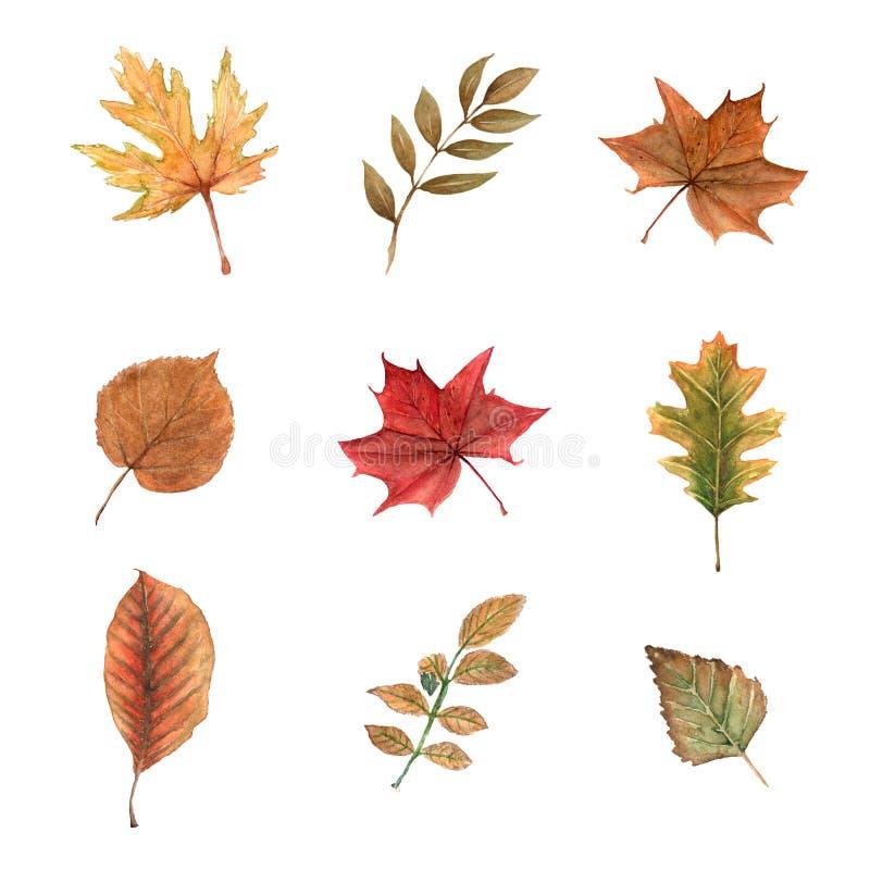 Grupo da aquarela de folhas de outono em um fundo branco ilustração do vetor