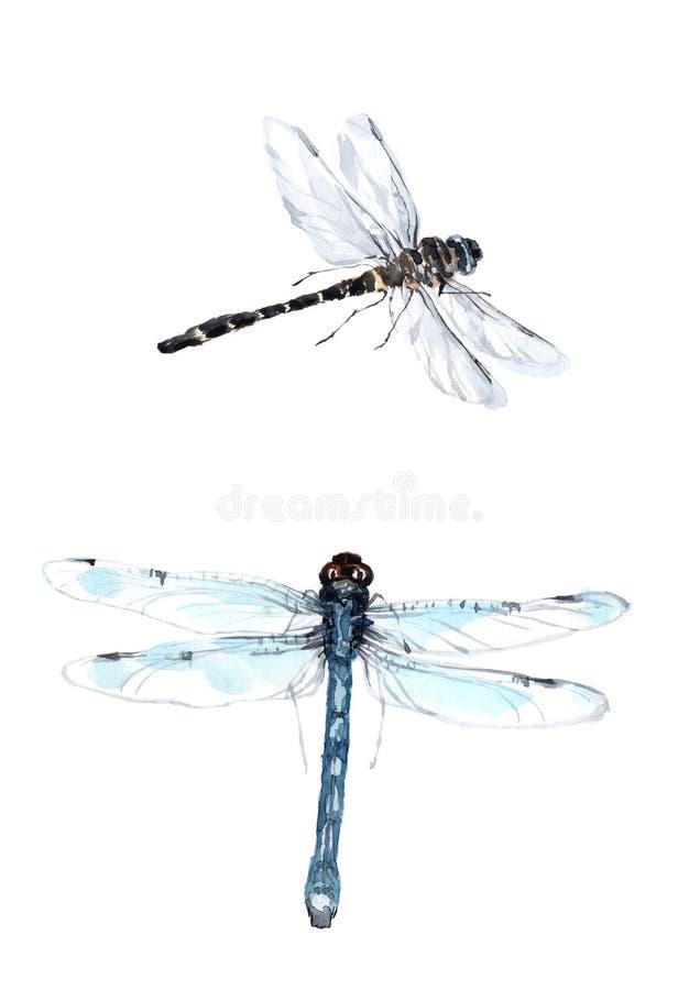 Grupo da aquarela de libélulas realísticas Ilustrações isoladas dos insetos ilustração royalty free