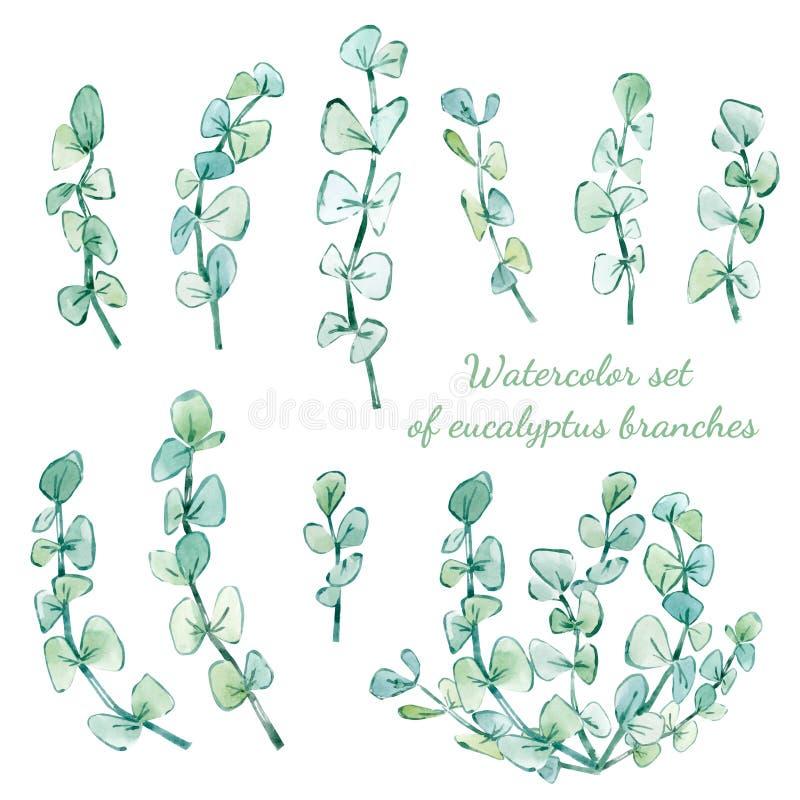 grupo da aquarela de ramos do eucalipto ilustração stock