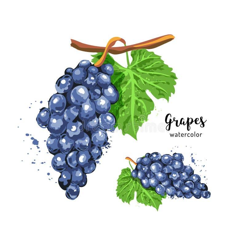 Grupo da aquarela de uvas em um fundo branco isolado Uvas da aquarela Ilustração do vetor ilustração do vetor